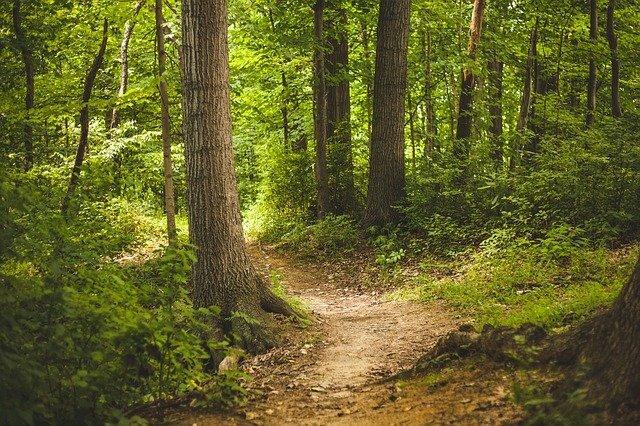 aydos ormanı hakkında merak edilen her Şey